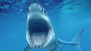 shark-07