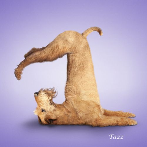 dog-yoga