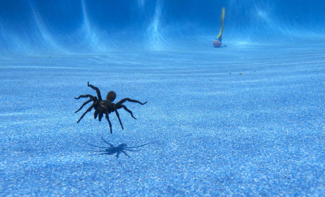 pool-spider